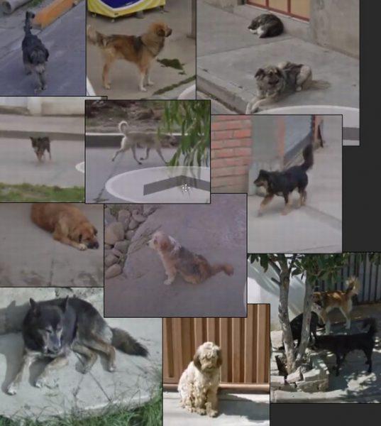 ボリビアの犬